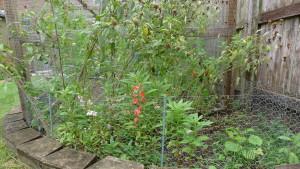 garden5 July 26 '15
