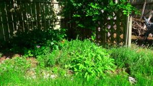 garden5 May 23 '16