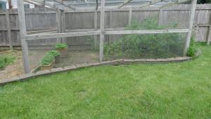 garden6 7-5-19