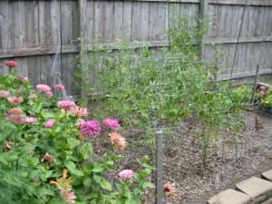 garden6 August 6 2011