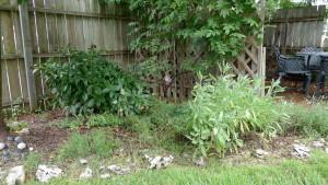 garden7 July 26 '15
