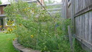 garden8 7-10-16
