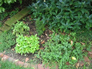 garden8 August 6 2011