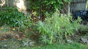 garden8 Sept 5 '15