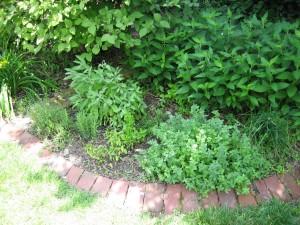garden8 june 10 2010