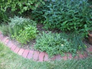 garden9 July 10 '10