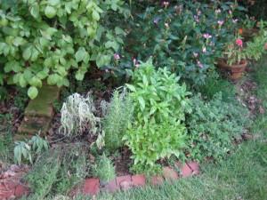 garden9 Sept 29 '10