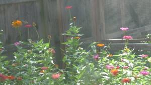 pollinator's paradise1