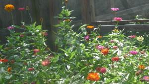 pollinator's paradise2