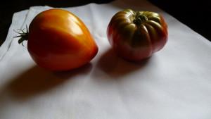 tomato still life 8-7-19