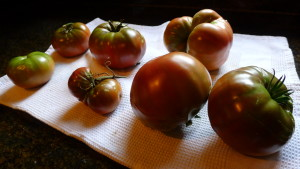 tomatoes1 2020