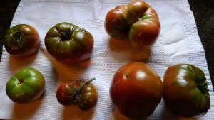 tomatoes2 2020
